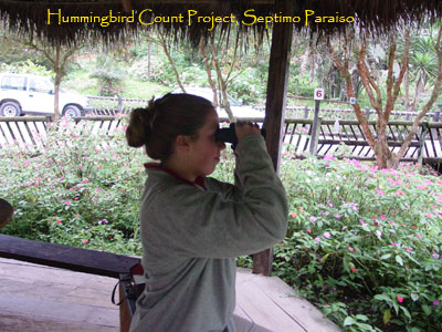Hummingbird counting project Mindo Ecuador